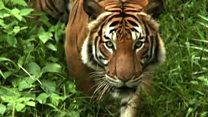 گزارش دو نهاد حفاظت از حیات وحش درخصوص وضعیت جانوران