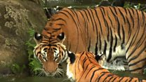تقرير: الحياة البرية حول العالم في خطر