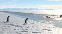 تشکیل بزرگترین پارک محافظت شده در قطب جنوب