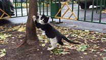 Жители Москвы требуют не замуровывать кошек в подвалах