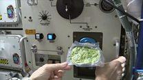 آیا فضانوردان می توانند مواد غذایی خود را در فضا بکارند؟