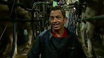 Farmer's FA Cup bid 'til cows come home