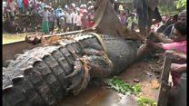Bắt được cá sấu lớn nhất Sri Lanka nhưng thả lại sông