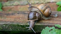 Has Jeremy the 'lefty' snail found love?
