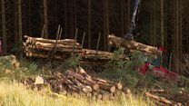 Holyrood push for devolved forestry