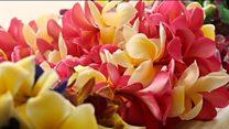 हवाई की मशहूर फूलों की मालाएं