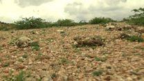 Somaliland oo qaaraan u ururineysa dadka ay abaarta saamaysay