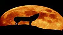 आज धरती के सबसे क़रीब होगा चांद