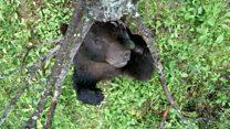 Web exclusive: Jungle boogie bears
