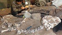 সাত কোটি বছর পুরনো ডায়নোসরের কঙ্কাল: অজানা তথ্য