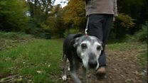'RSPCA took my healthy dog away'