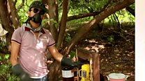 میکسیکو میں ہیروئین کی پیداوار