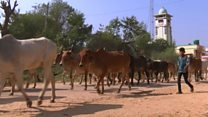 India's rural 'cashless' villagers