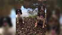 Police dogs do 'mannequin challenge'