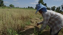 Can Thailand rice farmers survive low prices?