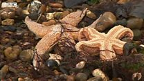 Hundreds of starfish stranded on Southsea beach