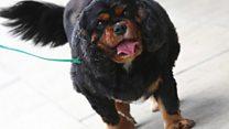 Slimmer winner dog's new leash of life