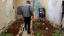 Жители осажденного Алеппо выращивают урожай на крышах