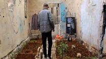 Город на даху: як вирощують овочі в Алеппо