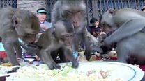 جشنواره غذا برای میمونها در تایلند