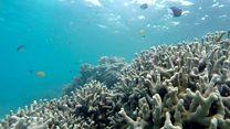 Great Barrier Reef 'suffers worst bleaching'