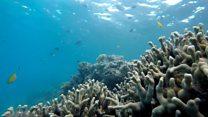 Як гинуть коралові рифи Австралії