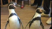Penguins bring festive cheer to care home