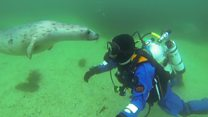 The man who swims with seals