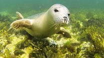 The Secret World of Seals