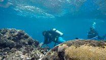 မဟာသန္တာကျောက်တန်းကြီး အရောင်ဖျော့လာ