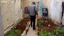 حلب شہر کے چھت کھیتوں میں بدل گئے