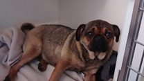 Dog thrown from car given 'lots of TLC'