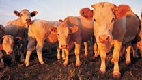 Scientists' concern for rapid methane rise