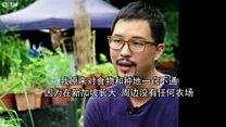 视频:蓬勃兴起的新加坡城市农场