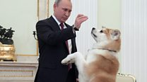 Putin's yappy dog dances for reporters