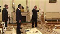 Mbwa wa Putin abweka na kuchezea wanahabari