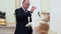 Anjing Vladimir Putin sambut wartawan Jepang