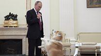 كلب بوتين يثير الذعر بين الإعلاميين