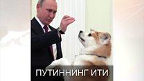 Путиннинг ити