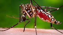 Virusi vya Zika vyagunduliwa nchini Tanzania