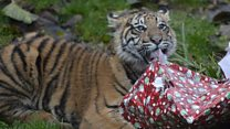 Santa Claws visits London Zoo