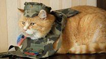 مسابقة لاختيار القط الأكثر وطنية في أوكرانيا