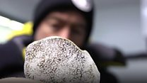 Australian scientists race for oldest ice