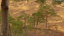 Coille Loch Airceig air a cheannach