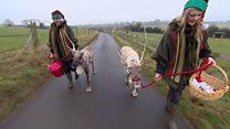 Reindeer Dancer and Blitzen bring joy in Gloucestershire