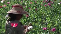 ဘိန်းစိုက်ပျိုးမှု နဲ့ တောင်သူတွေဘဝရပ်တည်ရေး