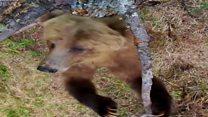 भालू का पोल डांस