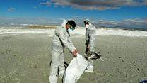 آنفولانزای مرغی بلای جان پرندگان وحشی در ایران