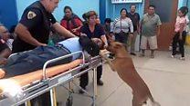 كلاب ترفض ترك صاحبها المصاب وترافقه إلى المستشفى