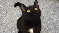 Stowaway cat takes 200-mile ride in van